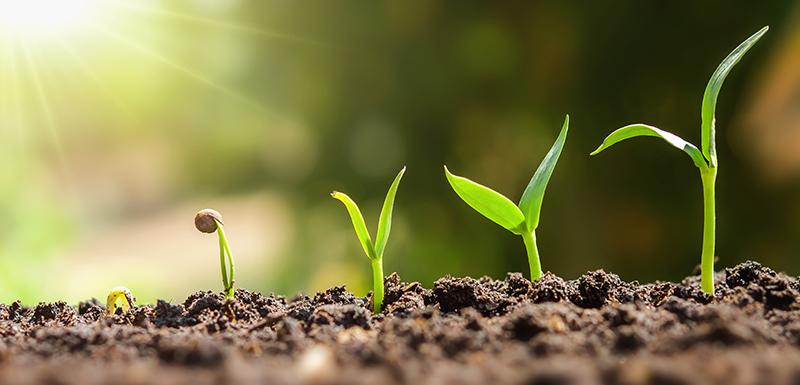 Hormone de croissance symbolisée par une plante